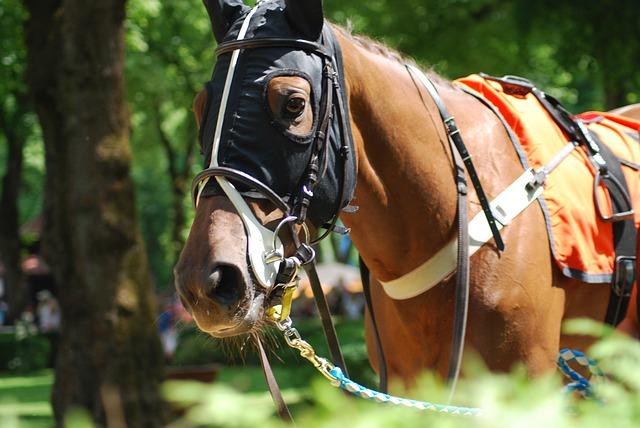 kenilworth horse racing tips